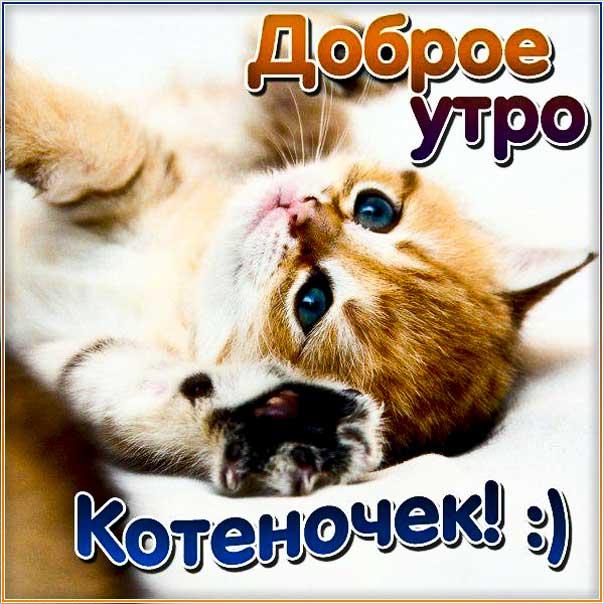 Картинка утро доброе котенок. Котик, с утром с надписью, цветы, котеночек, стишок, узоры, мерцающая, открытка утречко, удачного утра.